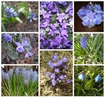 IrenaSabaliauskienė Mano pavasaris kvepia mėlynai